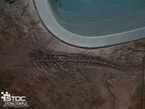 pool deck with stamped fossils